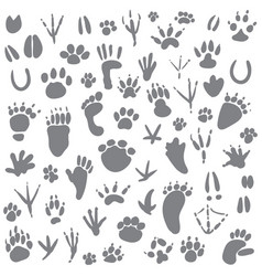 traces of animals vector image