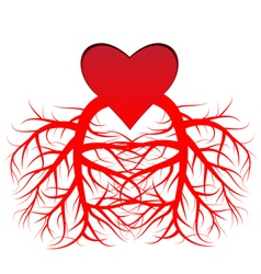 The heart and the veins vector