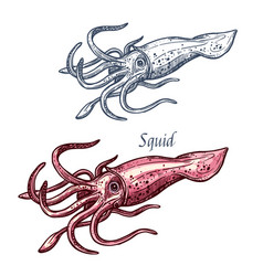 Squid seafood sea animal isolated sketch vector