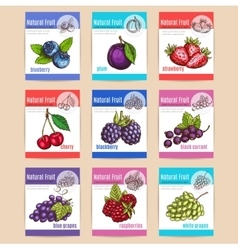 Natural fruits and berries posters vector image