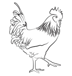 Cock symbol of chinese new year vector