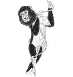 monkey with a rope vector image vector image
