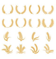 Silhouette of wheat corn symbols isolated vector