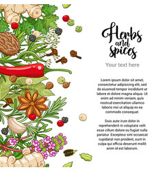 spicy card design with spices and herbs vector image