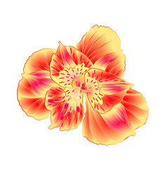 Alstroemeria flower lily closeup isolated on vector