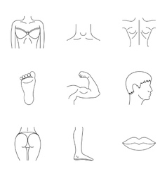 Human body icons set outline style vector