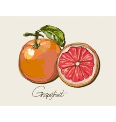 Fresh ripe grapefruit with leaves vector