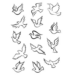 Outline graceful dove and pigeon birds vector