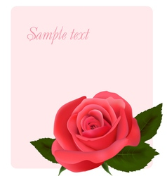 Card with beautiful pink rose vector