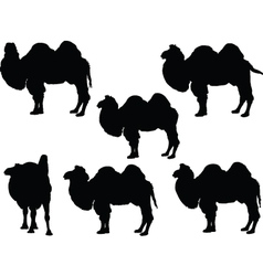 camel collection - vector image vector image