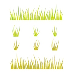 Collection of grass templates - green and yellow vector image
