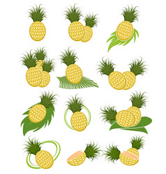 different variants of pineapples vector image vector image