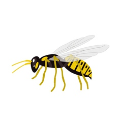 Wasp vector image vector image