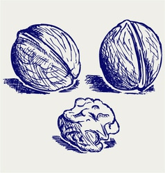 Walnut vector