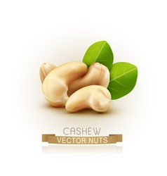 Group of cashew nuts isolated on white background vector