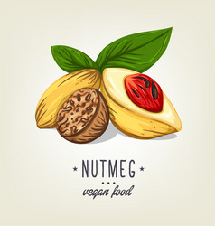 realistic colour nutmeg with leaves and seeds vector image vector image