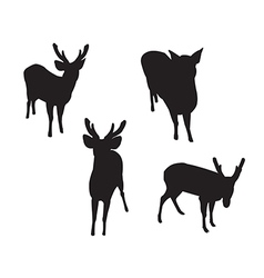 Deer set silhouettes on the white background vector