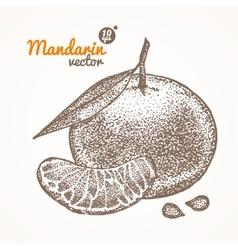 Mandarin Card Hand Draw Sketch vector image vector image