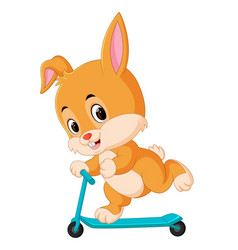 cute rabbit riding a scooter vector image