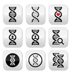 Dna genetics buttons set vector