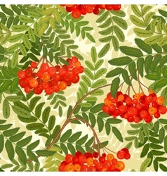 seamless pattern Rowanberries background vector image