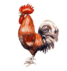 Red cock vector