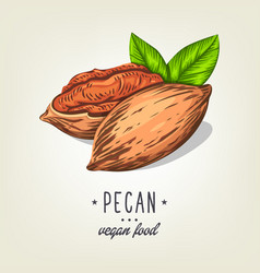 icon of pecan nut isolated on background vector image