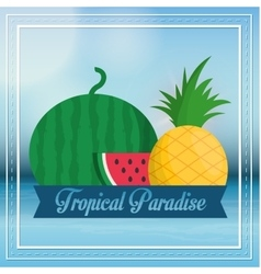Watermelon and pineapple fruit and summer concept vector