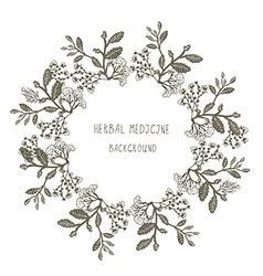 Herbal medicine label or frame sketchy design with vector