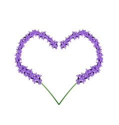 Purple lavender flowers in heart shape frame vector