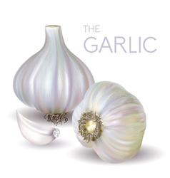 garlic bulb and slice vector image vector image