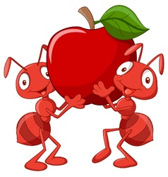 Two ants holding red apple vector image