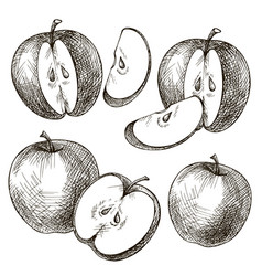 Set of apples hand drawn vector