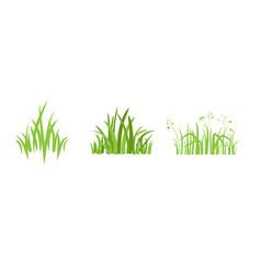 element eco green vector image