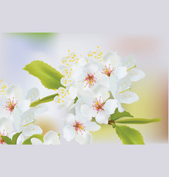 Spring blossom flowers branch spring delicate vector