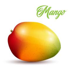 mango on white background vector image