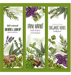 Herb and spice natural food sketch banner set vector