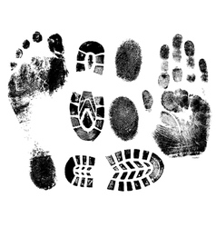 A Selection of highly detailed hand finger feet an vector image