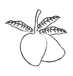 Mango fruit icon image vector