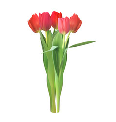 realistic colorful tulips vector image vector image