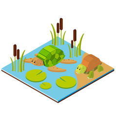 Pond scene with two turtles in 3d design vector