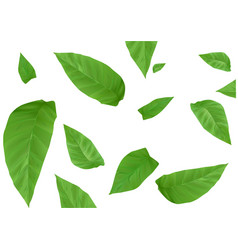 Tobacco leaves background vector