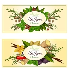 Hot spices and herbs banners set vector