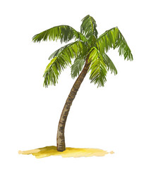 Palm tree hand drawn painted vector