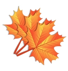 Maple leaf on a white background vector