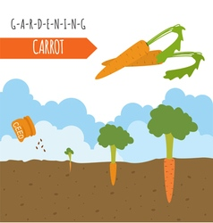 Gardening work farming carrot graphic template vector