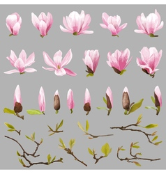 Magnolia flowers and leaves set exotic flower vector