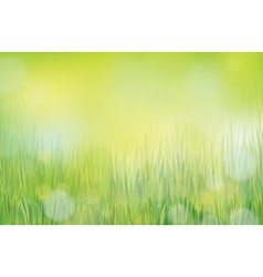 Spring green grass vector