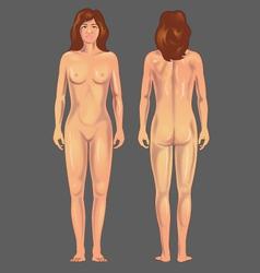Female anterior posterior vector
