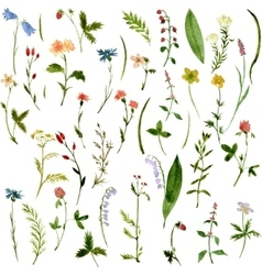 Set of watercolor drawing herbs and flowers vector